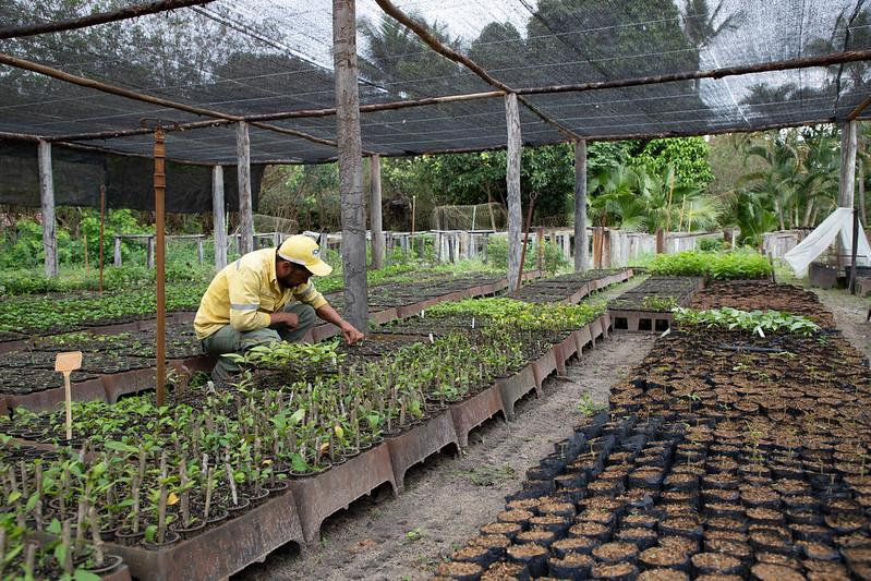 The restoration of thousands of hectares of degraded areas of land in the north of Espírito Santo, Brazil.