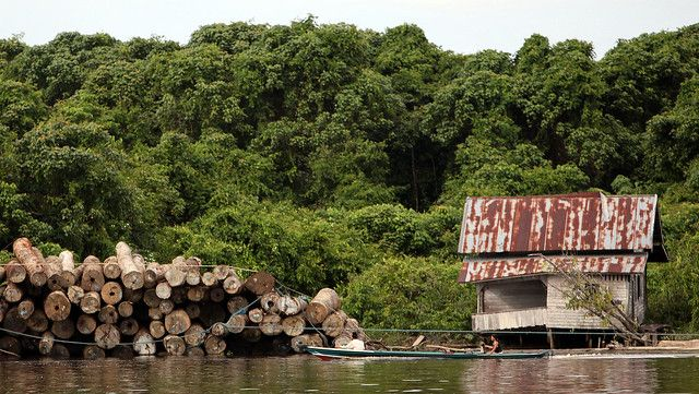 Local villagers floating past a pile of illegally logged tress in Indonesia