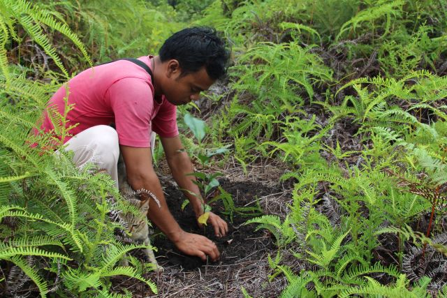 The Pesalat Reforestation Project in Central Kalimantan, Indonesia, works to restore forest within a national park degraded by fire and logging. As of 2013, 450 hectares are under restoration, with over 4,000 seedlings planted. Photo by Aaron Minnick/WRI