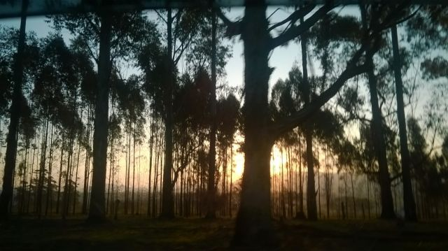 Forest at dawn in Minas Gerais. Flickr/Monica Pellegrini