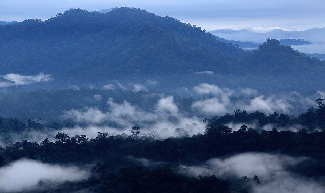 """GFW Climate will help measure emissions from tropical deforestation. Photo credit: <a href=""""https://www.flickr.com/photos/cifor/14626255095/in/album-72157645614284212/"""">M. Edliadi for the Center for International Forestry Research (CIFOR)</a> <a href=""""https://creativecommons.org/licenses/by/2.0/"""">cc</a>"""