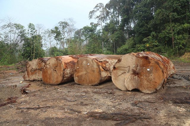 Harvesting logs in Malaysia.