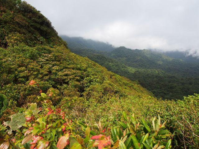 Monteverde Cloud Forest in Costa Rica.