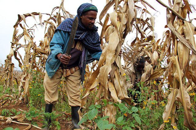 A farmer in Babati, Tanzania.