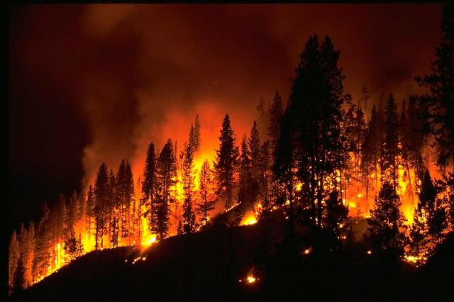 A forest fire at night.