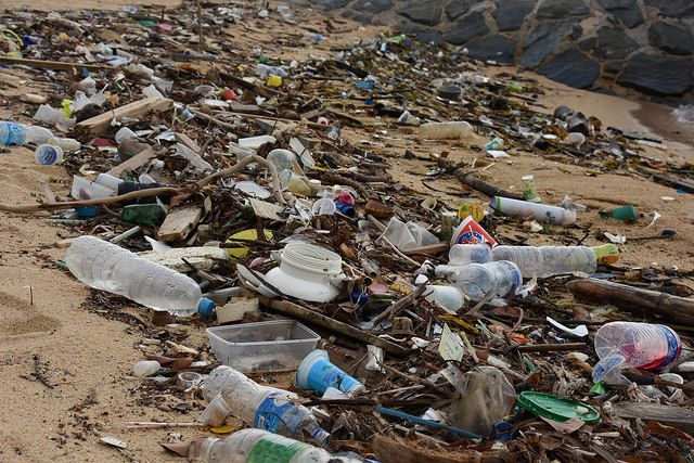 Plastic litter along Singapore's East Coast Parkway