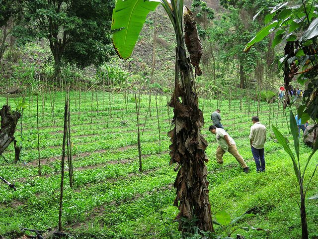 Farmers in Costa Rica
