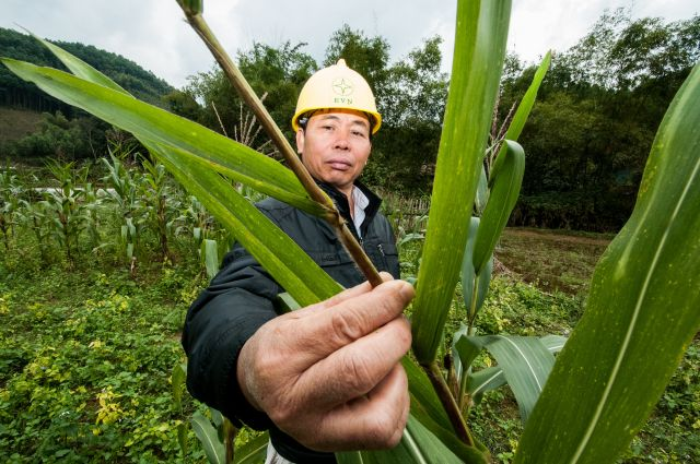 Resilience bonds can fund things like climate-smart agriculture. Flickr/Georgina Smith, CIAT