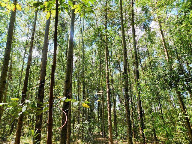 Landscape restoration in Água Boa, Brazil.