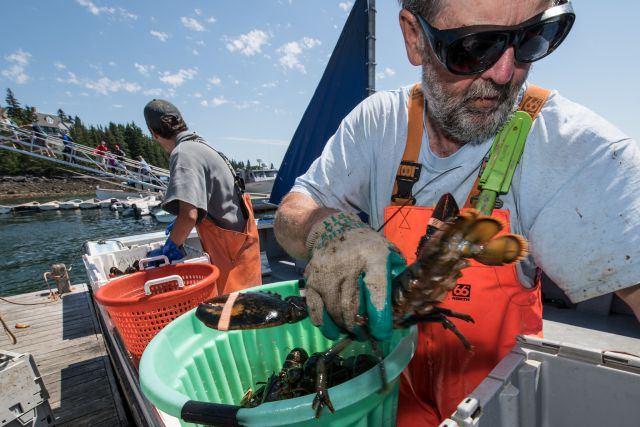 Two fishermen offloading lobster from their boat onto a floating dock in Maine.
