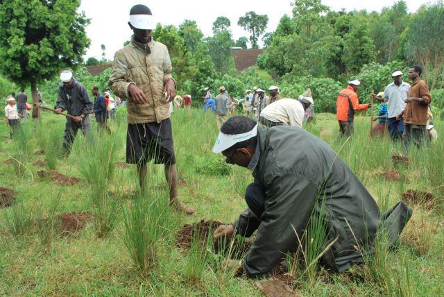 Community tree planting in Ethiopia. Carbon removal by trees will be vital to meeting climate goals. Flickr/USAID