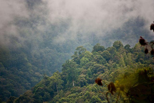 Fog over the forest in Kerinci-Seblat National Park. Flickr/Luke Macklin