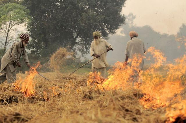 Some of Delhi's dangerous air pollution comes from crop burning in neighboring states. Photo by Neil Palmer/CIAT.