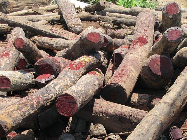 Rosewood stockpile