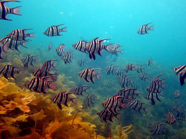 Schooling fish off the coast of Australia. Photo by Saspotato/Flickr