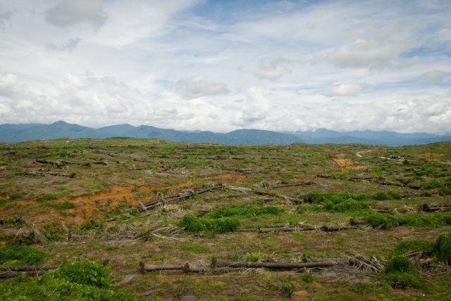 Deforestation in Indonesia.