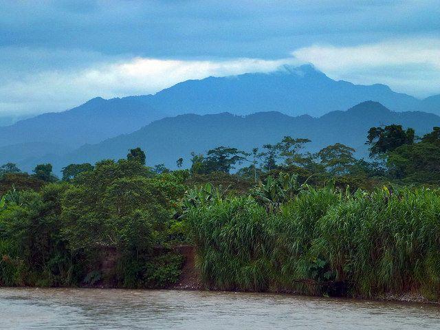 (Shampuyacu, Peru) Photo by Bruno Locatelli/CIFOR.