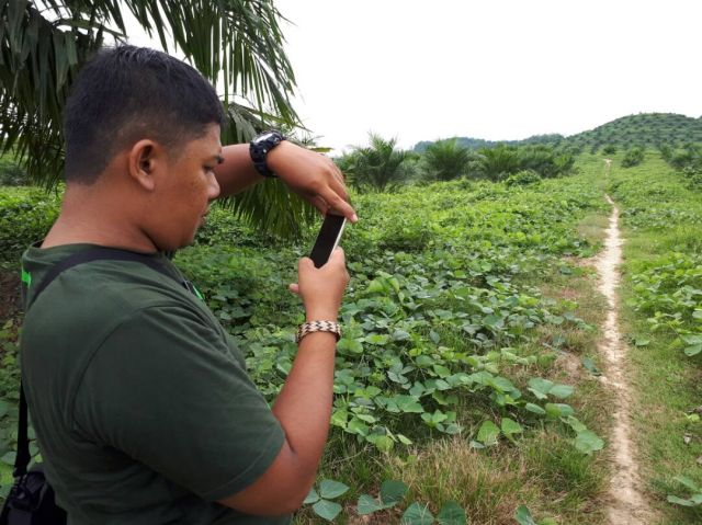 Using Forest Watcher in the Leuser Ecosystem to record evidence of a new palm oil plantation.