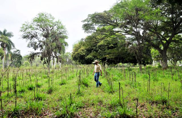 A farmer tends his agroforestry system in Colombia. Photo by Neil Palmer/CIAT.