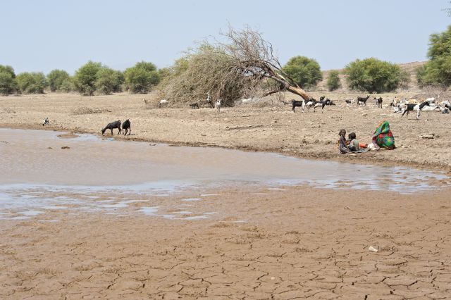 A family and their goats gather at a watering hole, Danakil triangle, Ethiopia