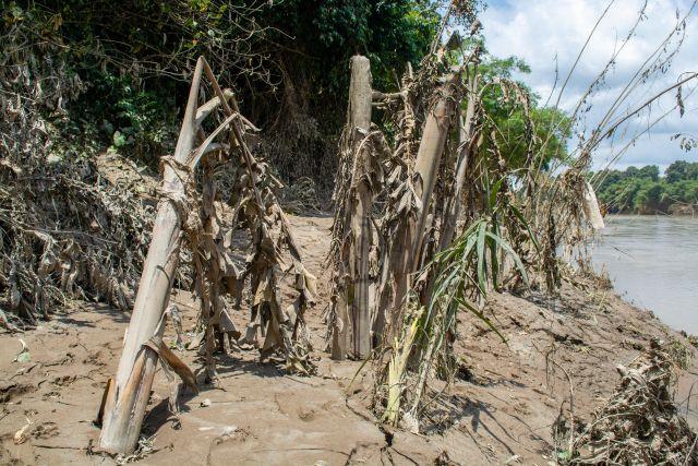 Ruined banana trees in Kerala