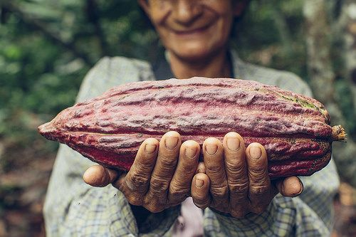 Woman holding cacao