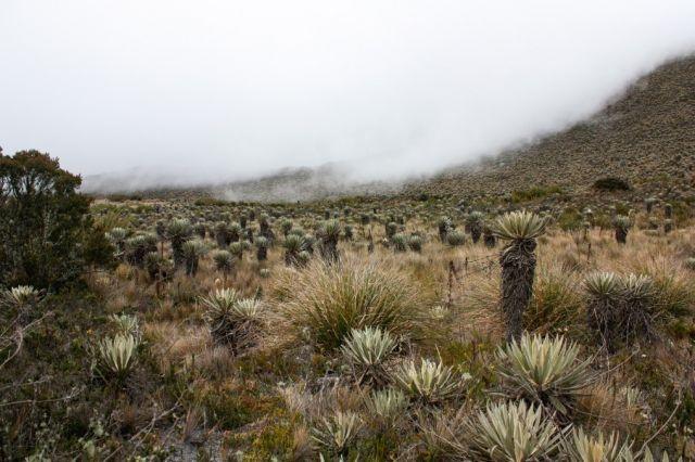 The Sumapaz Páramo landscape near Bogotá, Colombia.