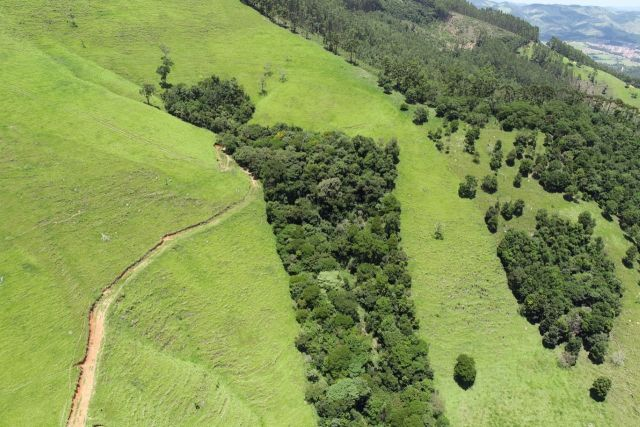 Regenerated forest in Extrema, Brazil