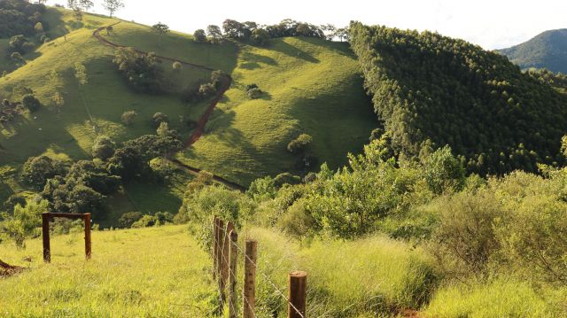 Extrema, Brazil plantation