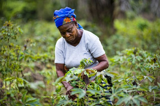 Manioc farmer