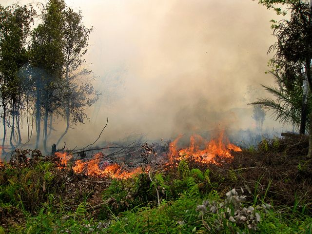 A fire in Kalimantan, Indonesia. Photo by Rini Sulaiman/ Norwegian Embassy for Center for International Forestry Research (CIFOR)