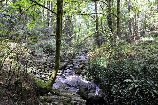 Forest watershed
