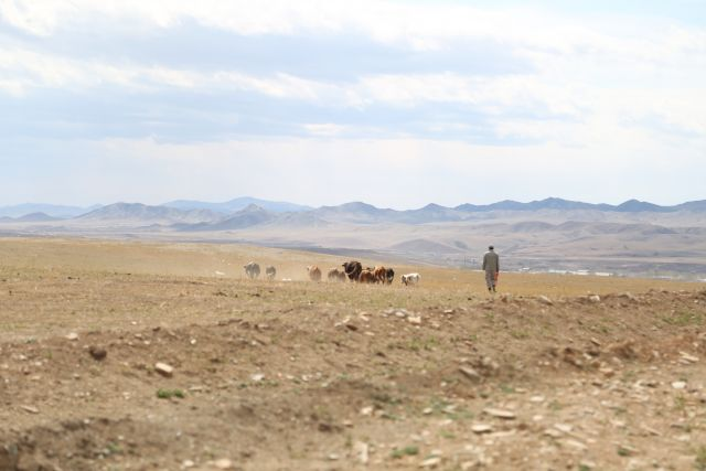 Herders in Zaamar, Mongolia