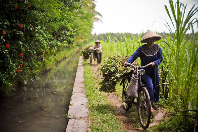 Farmers in Yogyakarta