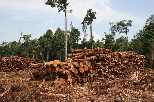 Indonesia lost more than 6 million hectares of primary forest from 2000 to 2012. Photo credit: Rainforest Action Network, Flickr