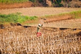 A drought-ridden field in Ciampea, Indonesia. Photo credit: Danumurthi Mahendra, Flickr