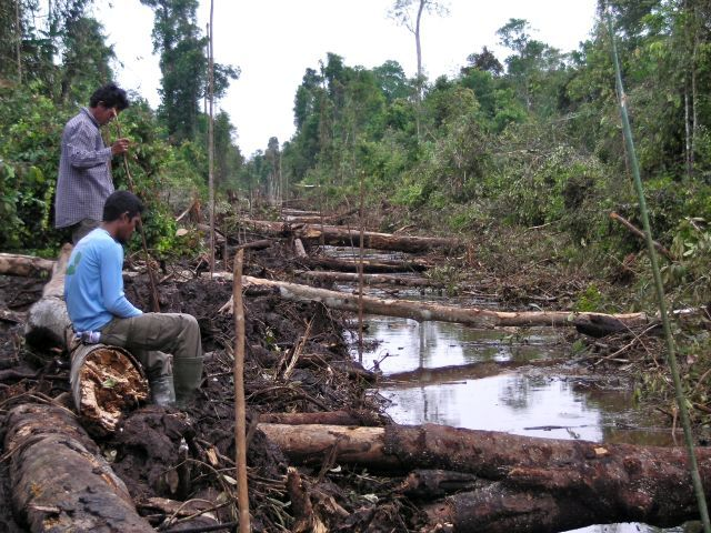 Thirty percent of Indonesia's territories have been handed over to private companies as concessions, with many of them overlapping with indigenous lands. Photo by Rainforest Action Network/Flickr.