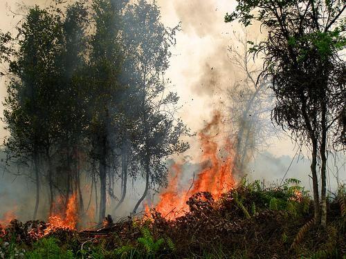 Kebakaran hutan di Kalimantan, Indonesia, pada September 2011. Kredit foto: Rini Sulaiman, Kedutaan Besar Norwegia untuk Center for International Forestry Research.