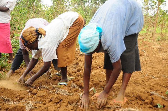 Women in a Kenyan village employ conservational farming techniques. Photo by P.Casier/CGIAR