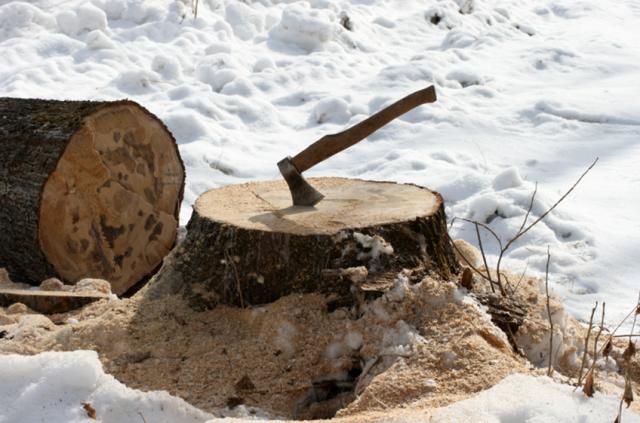 Illegal logging in Russian Far East, near Dalnerechensk in Primorsky. Photo credit: Environmental Investigation Agency
