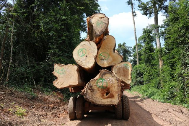 Large logs sit on a truck bed in a forest concession in Ghana.