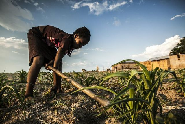 """Authors of a paper on transformational adaptation have deemed the development of heat-resistant maize in Africa """"transformative."""" Photo credit: WorldFish, Flickr 2012"""