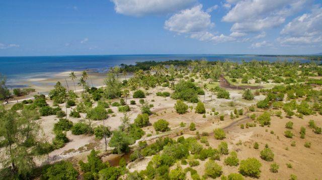 Mangrove restoration area in Vanga, Kenya