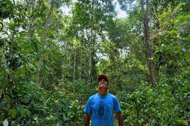 Brazil nut producer, Peru