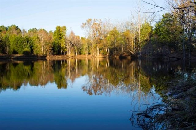 A small lake with trees in the background in North Carolina's Triangle region