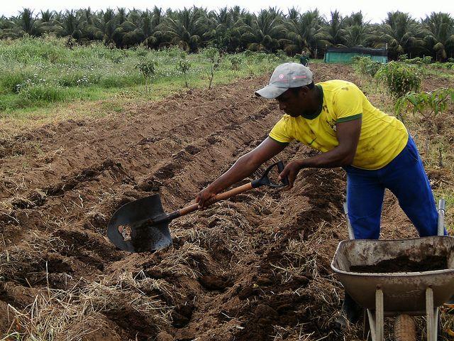 O Brasil está em quinto lugar entre os maiores emissores de GEE, principalmente por causa dos impactos das emissões do setor agropecuário. Fonte: Organicos do PIVAS/Flickr