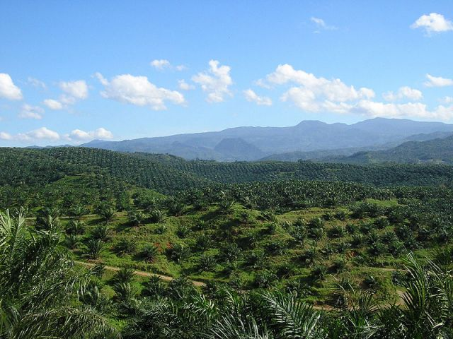 Most palm oil comes from Indonesia and Malaysia. Photo credit: Achmad Rabin Taim, Wikimedia Commons