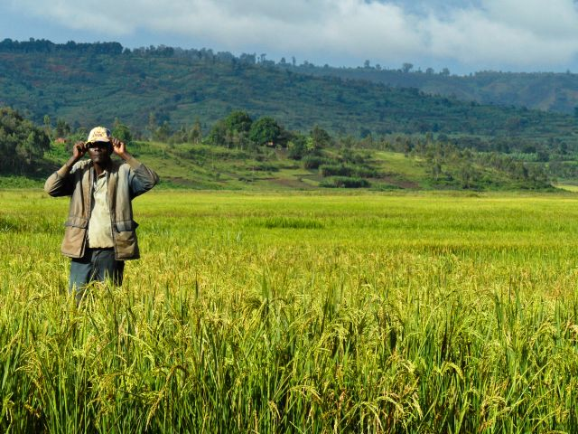 A farmer stands amidst a rice farm in Burundi, Africa. Photo Credit: Flickr/IRRI Images