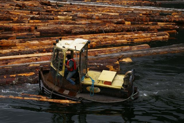 Some countries have harvest or export bans on certain species or certain forms of harvested timber. It is important for companies to consider which timber species they are using and where they are purchasing from. Photo credit: Tim Gage, Flickr 2007
