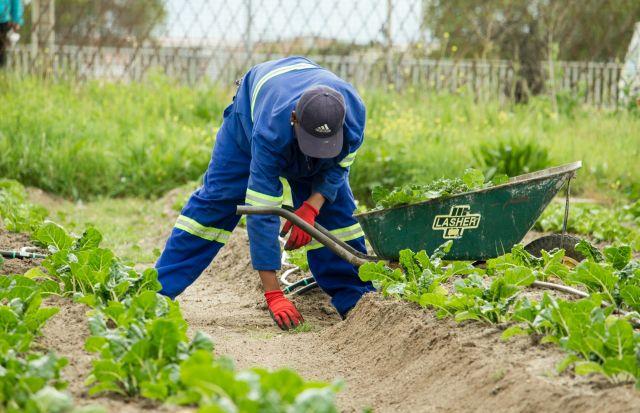 A man working on a farm.